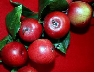 663041_christmas_apples